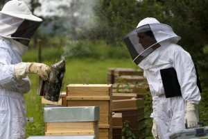 kit-apiculture